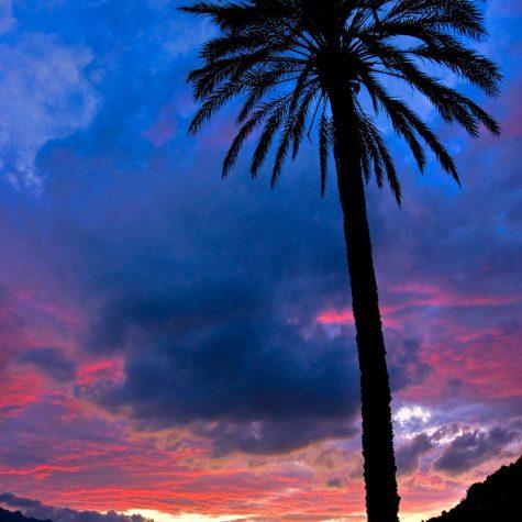 La Palma di Forno al Tramonto